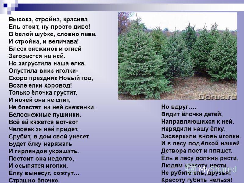 Высока, стройна, красива Ель стоит, ну просто диво! В белой шубке, словно пава, И стройна, и величава! Блеск снежинок и огней Загорается на ней. Но загрустила наша елка, Опустила вниз иголки- Скоро праздник Новый год, Возле елки хоровод! Только ёлочк