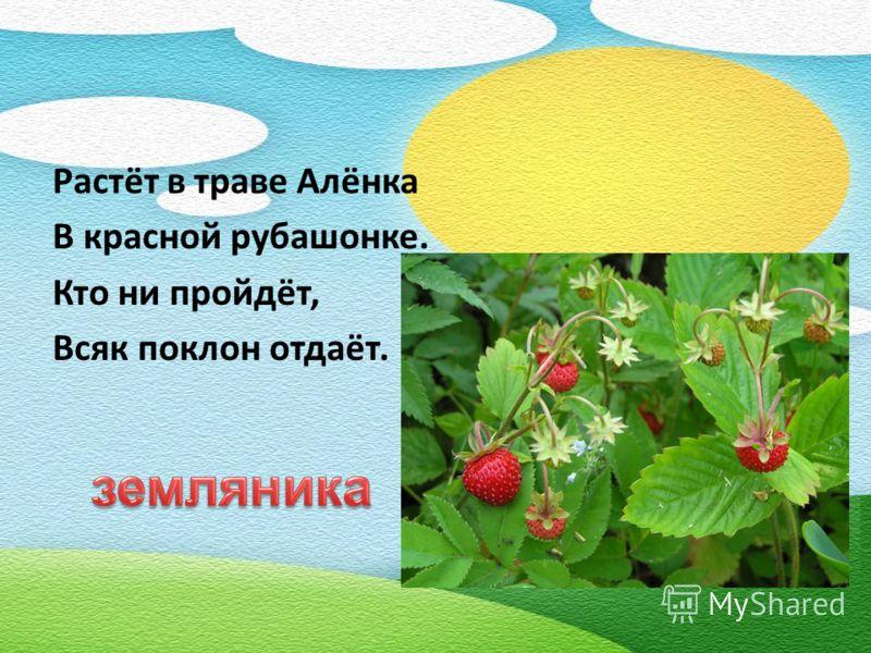 Растёт в траве Алёнка В красной рубашонке. Кто ни пройдёт, Всяк поклон отдаёт.