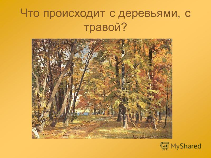 Что происходит с деревьями, с травой?
