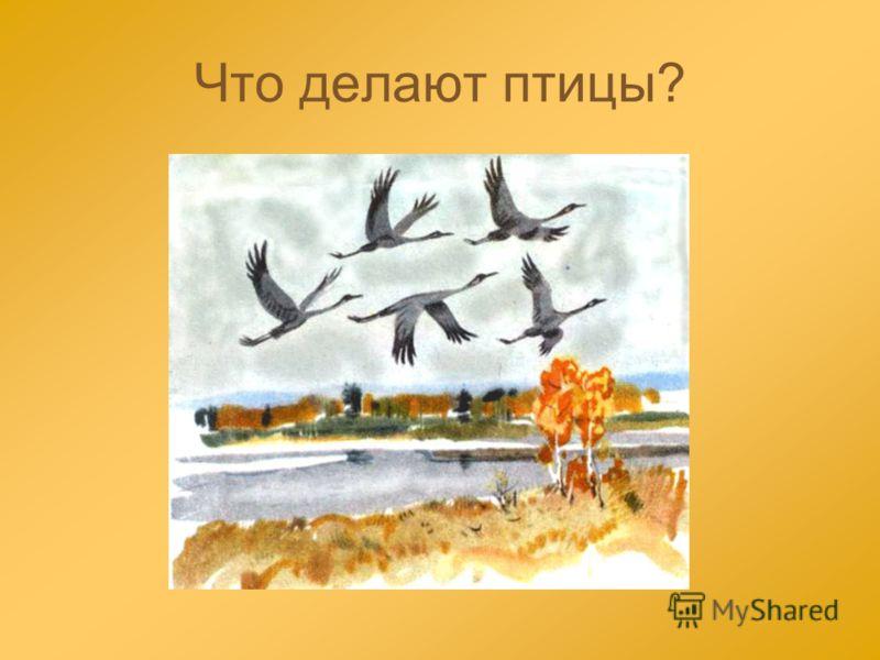 Что делают птицы?