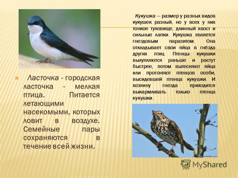 Ласточка - городская ласточка - мелкая птица. Питается летающими насекомыми, которых ловит в воздухе. Семейные пары сохраняются в течение всей жизни. Кукушка размер у разных видов кукушек разный, но у всех у них тонкое туловище, длинный хвост и сильн