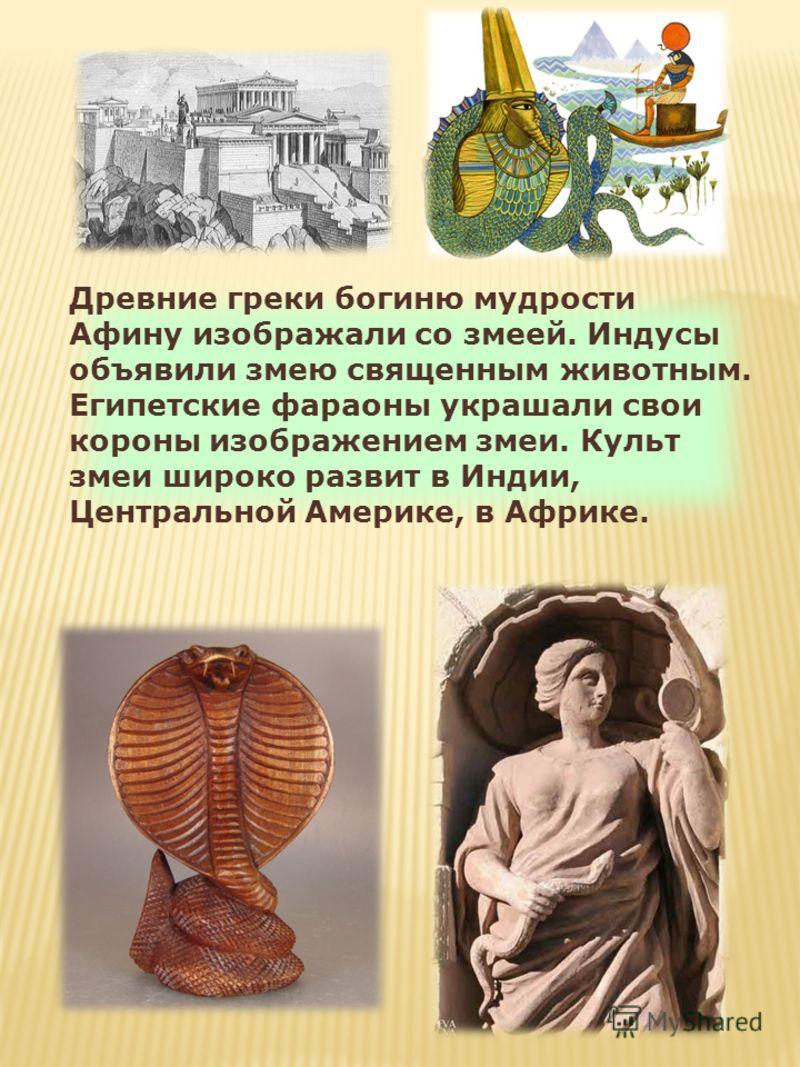 Древние греки богиню мудрости Афину изображали со змеей. Индусы объявили змею священным животным. Египетские фараоны украшали свои короны изображением змеи. Культ змеи широко развит в Индии, Центральной Америке, в Африке.