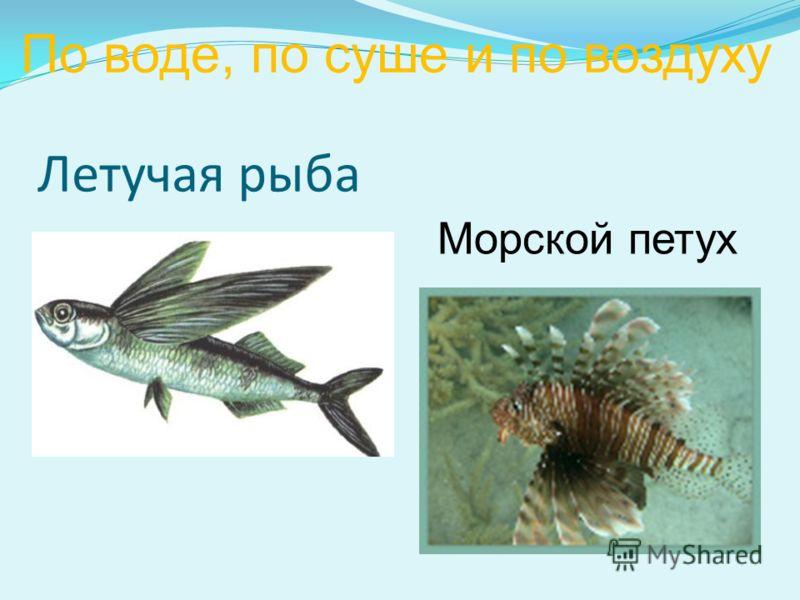 Летучая рыба Морской петух По воде, по суше и по воздуху