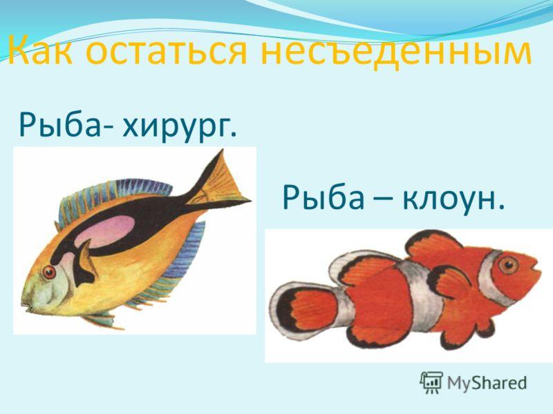 Рыба- хирург. Рыба – клоун. Как остаться несъеденным