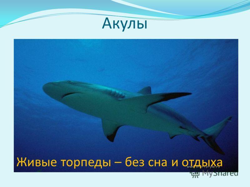 Акулы Живые торпеды – без сна и отдыха