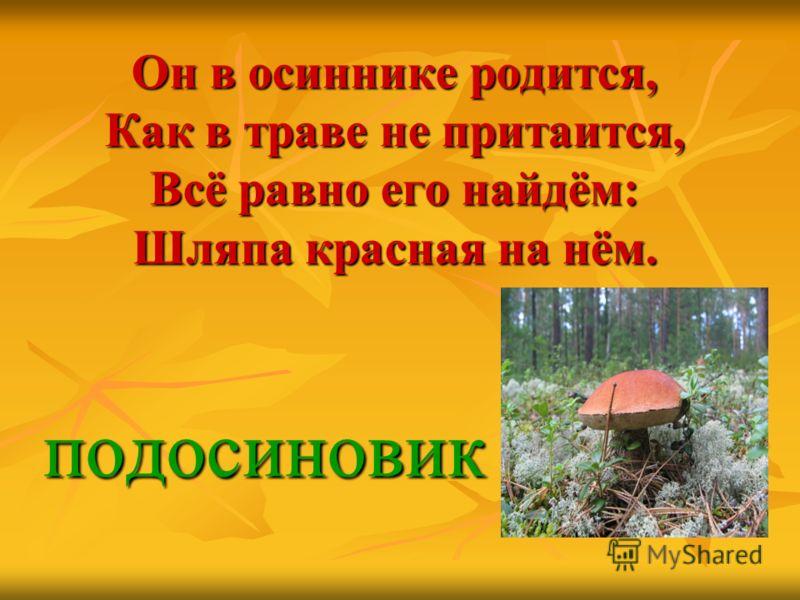 Он в осиннике родится, Как в траве не притаится, Всё равно его найдём: Шляпа красная на нём. подосиновик