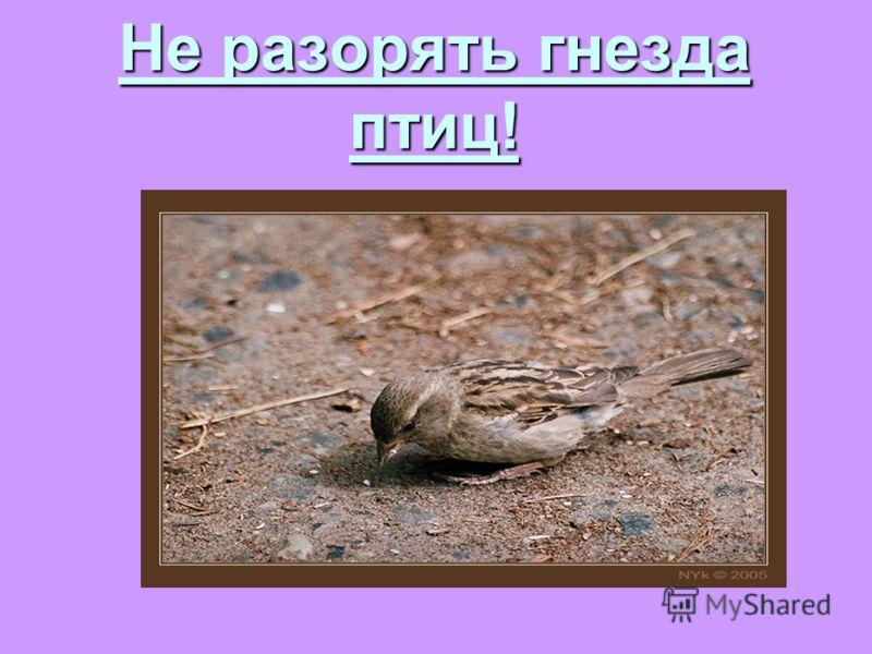 Не разорять гнезда птиц!