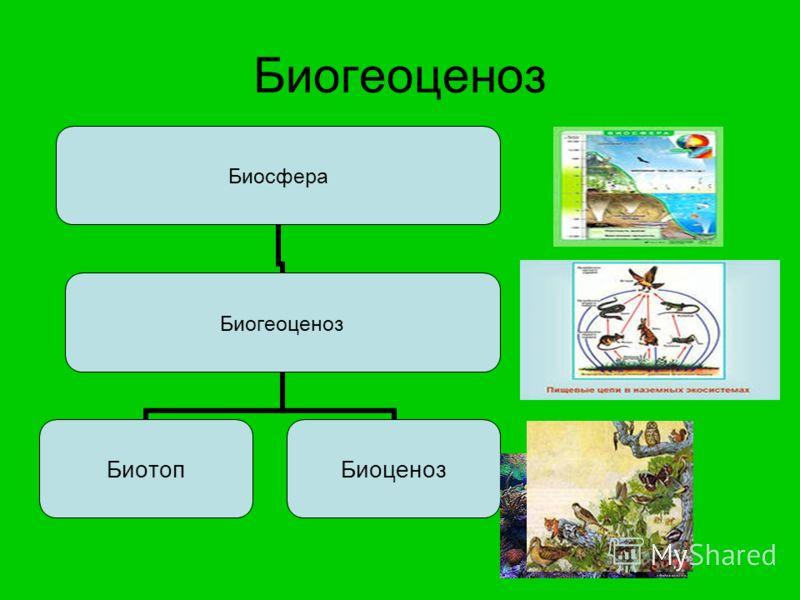 Биогеоценоз Биосфера Биогеоценоз БиотопБиоценоз