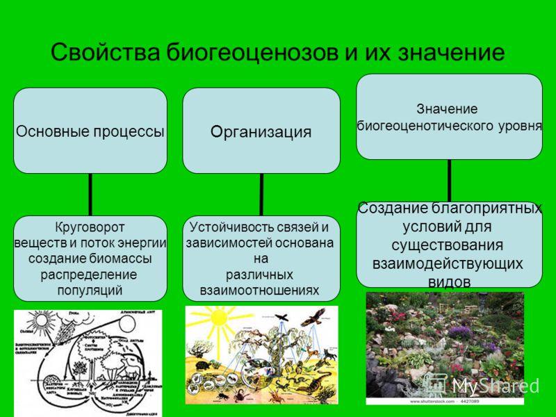 Свойства биогеоценозов и их значение Основные процессы Круговорот веществ и поток энергии создание биомассы распределение популяций Организация Устойчивость связей и зависимостей основана на различных взаимоотношениях Значение биогеоценотического уро