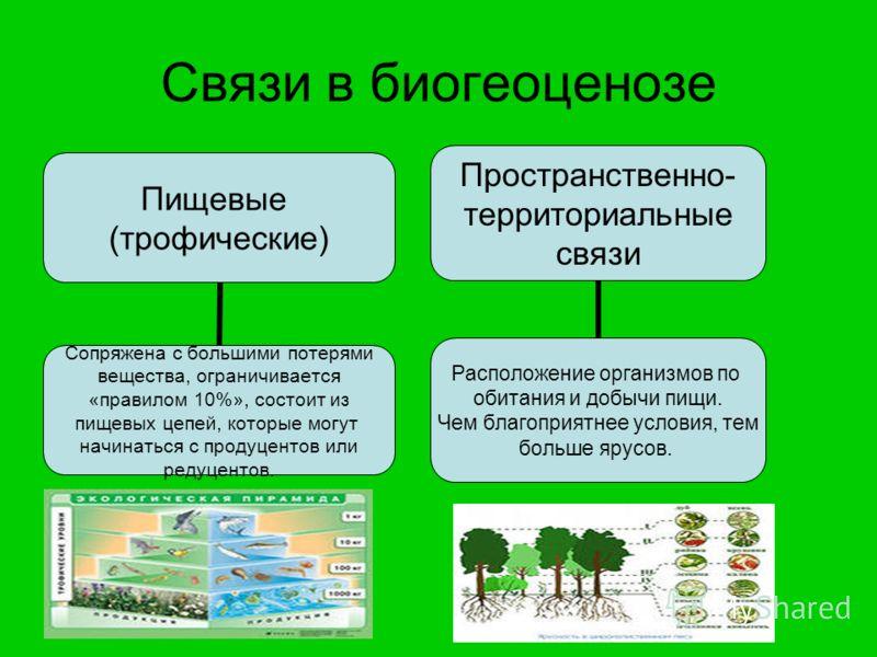 Связи в биогеоценозе Пищевые (трофические) Сопряжена с большими потерями вещества, ограничивается «правилом 10%», состоит из пищевых цепей, которые могут начинаться с продуцентов или редуцентов. Пространственно- территориальные связи Расположение орг