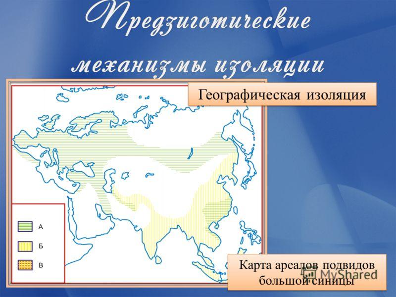 Карта ареалов подвидов большой синицы Географическая изоляция