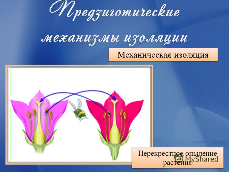 Механическая изоляция Перекрестное опыление растения