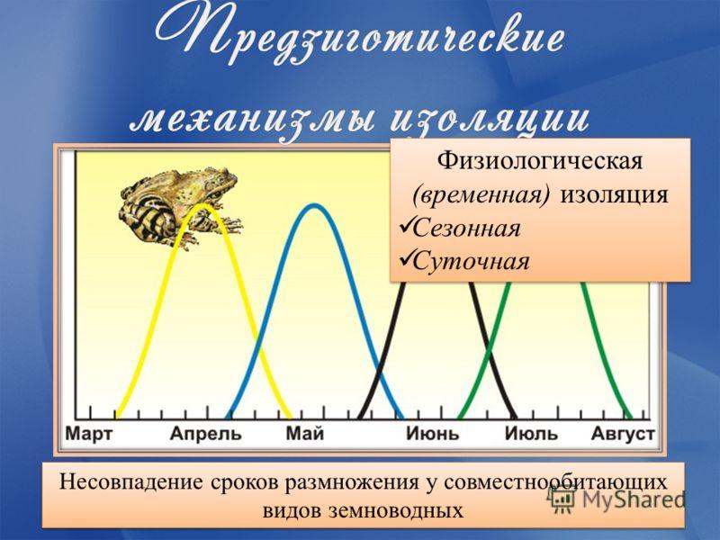 Несовпадение сроков размножения у совместнообитающих видов земноводных Физиологическая (временная) изоляция Сезонная Суточная Физиологическая (временная) изоляция Сезонная Суточная