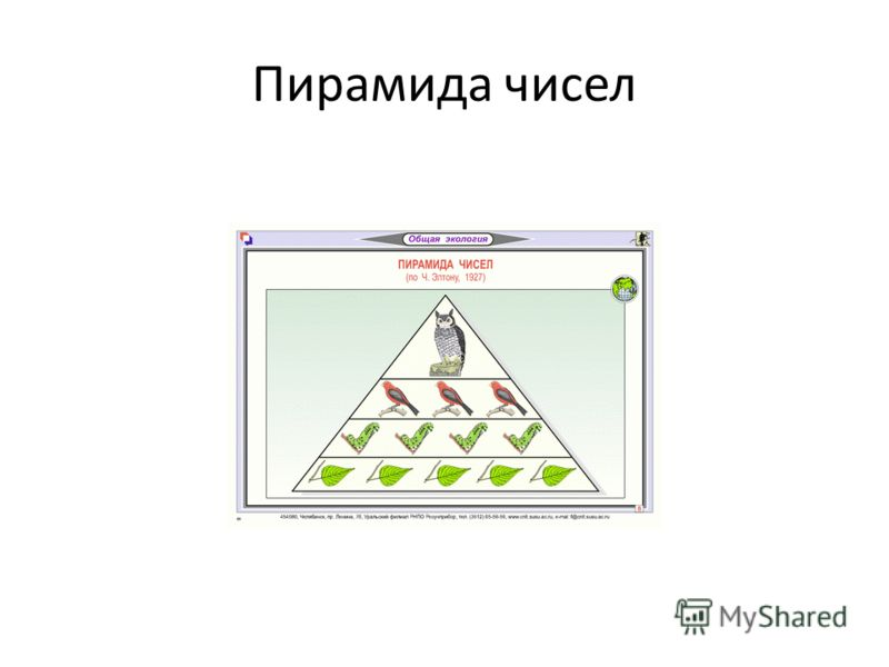 Пирамида чисел