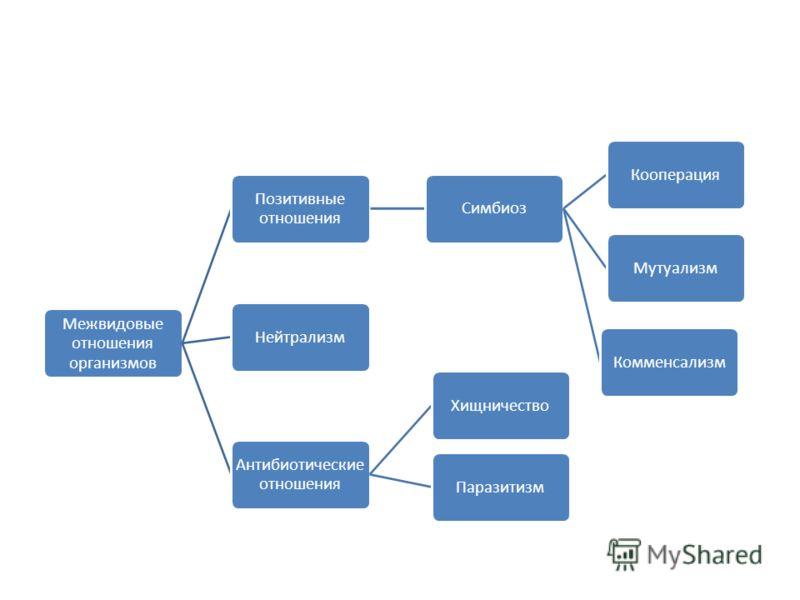 Межвидовые отношения организмов Позитивные отношения СимбиозКооперацияМутуализмКомменсализм Антибиотически е отношения ХищничествоПаразитизмНейтрализм
