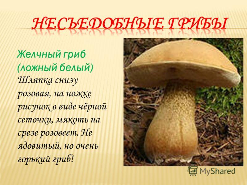 Желчный гриб (ложный белый) Шляпка снизу розовая, на ножке рисунок в виде чёрной сеточки, мякоть на срезе розовеет. Не ядовитый, но очень горький гриб!