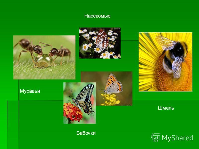 Насекомые Муравьи Бабочки Шмель