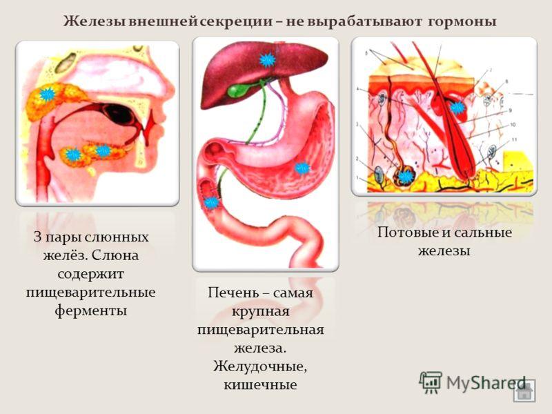 Железы внешней секреции – не вырабатывают гормоны З пары слюнных желёз. Слюна содержит пищеварительные ферменты Печень – самая крупная пищеварительная железа. Желудочные, кишечные Потовые и сальные железы