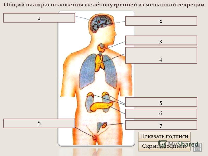 Железа Вилочковая
