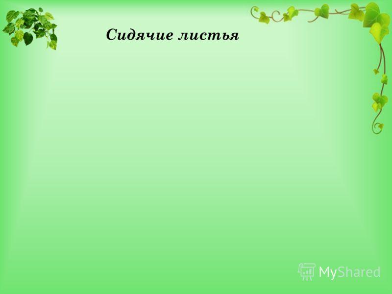 Сидячие листья