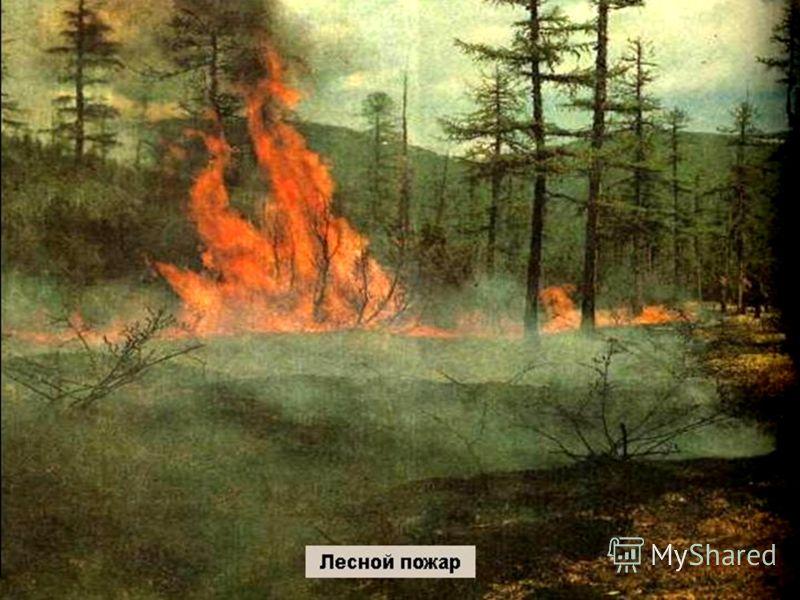 download Униформа и знаки различия Австро венгерской армии 1914