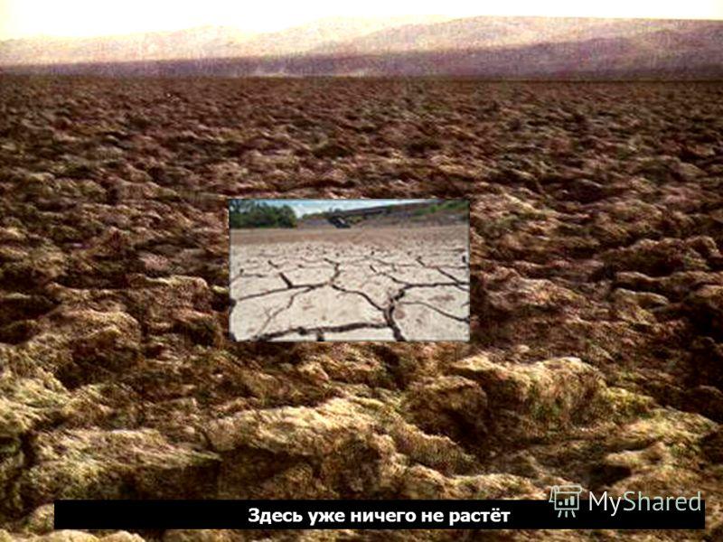 Долина Смерти в Калифорнии –одно из самых жарких мест на Земле Здесь уже ничего не растёт