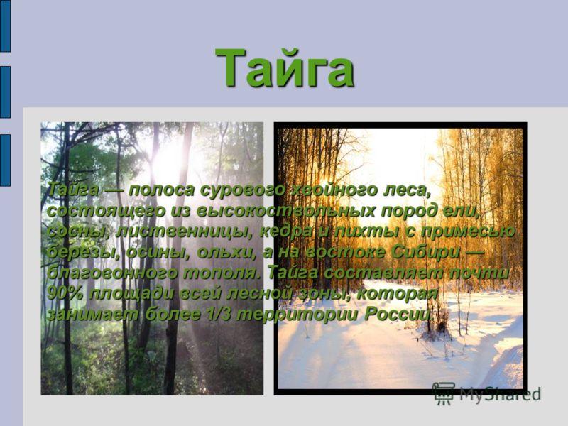 Тайга Тайга полоса сурового хвойного леса, состоящего из высокоствольных пород ели, сосны, лиственницы, кедра и пихты с примесью березы, осины, ольхи, а на востоке Сибири благовонного тополя. Тайга составляет почти 90% площади всей лесной зоны, котор