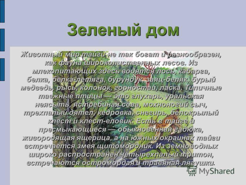 Зеленый дом Животный мир тайги не так богат и разнообразен, как фауна широколиственных лесов. Из млекопитающих здесь водятся лось, кабарга, белка, белка-летяга, бурундук, заяц-беляк, бурый медведь, рысь, колонок, горностай, ласка. Типичные таежные пт