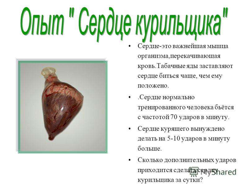 Сердце-это важнейшая мышца организма,перекачивающая кровь.Табачные яды заставляют сердце биться чаще, чем ему положено..Сердце нормально тренированного человека бьётся с частотой 70 ударов в минуту. Сердце курящего вынуждено делать на 5-10 ударов в м