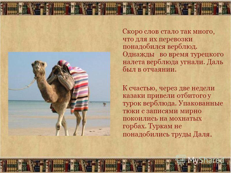 11 Скоро слов стало так много, что для их перевозки понадобился верблюд. Однажды во время турецкого налета верблюда угнали. Даль был в отчаянии. К счастью, через две недели казаки привели отбитого у турок верблюда. Упакованные тюки с записями мирно п