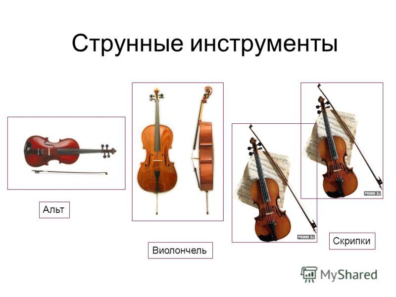 Струнные инструменты Альт Виолончель Скрипки