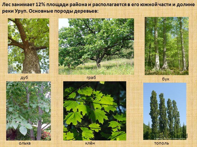 Лес занимает 12% площади района и располагается в его южной части и долине реки Уруп. Основные породы деревьев: дубграб бук ольхаклёнтополь