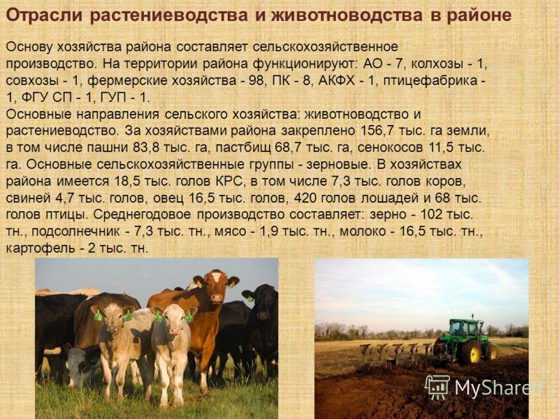 Отрасли растениеводства и животноводства в районе Основу хозяйства района составляет сельскохозяйственное производство. На территории района функционируют: АО - 7, колхозы - 1, совхозы - 1, фермерские хозяйства - 98, ПК - 8, АКФХ - 1, птицефабрика -