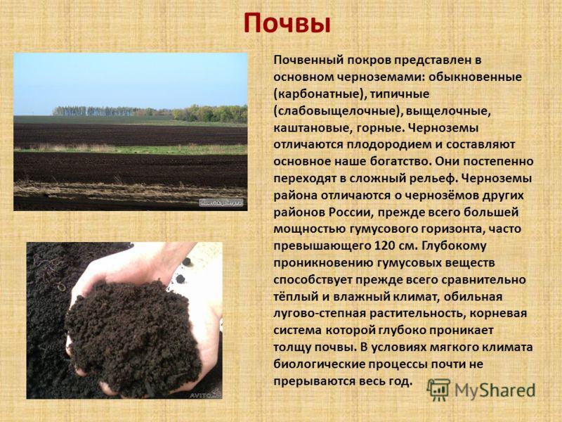 Почвы Почвенный покров представлен в основном черноземами: обыкновенные (карбонатные), типичные (слабовыщелочные), выщелочные, каштановые, горные. Черноземы отличаются плодородием и составляют основное наше богатство. Они постепенно переходят в сложн