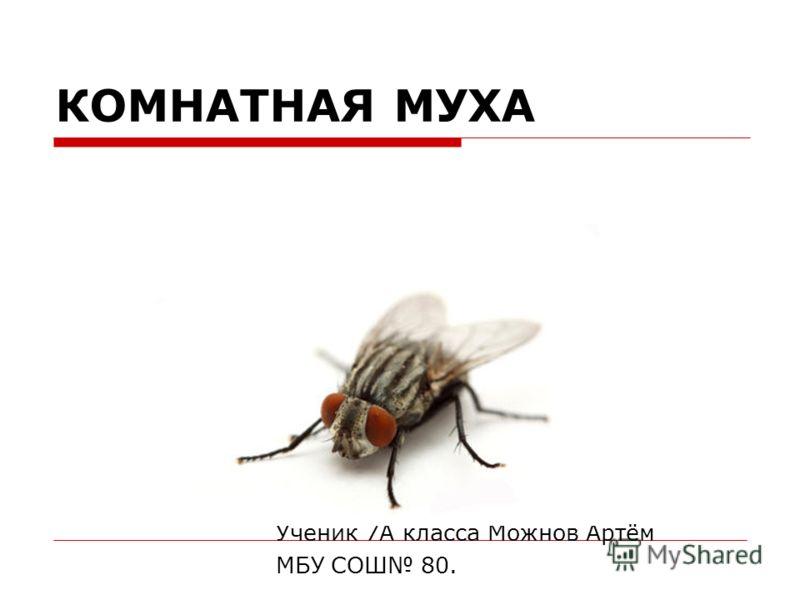 КОМНАТНАЯ МУХА Ученик 7А класса Можнов Артём МБУ СОШ 80.