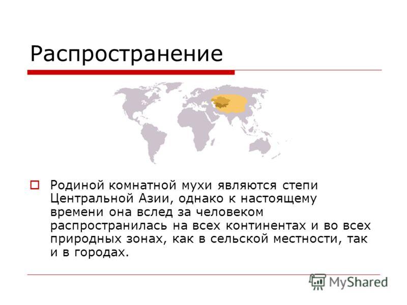 Распространение Родиной комнатной мухи являются степи Центральной Азии, однако к настоящему времени она вслед за человеком распространилась на всех континентах и во всех природных зонах, как в сельской местности, так и в городах.
