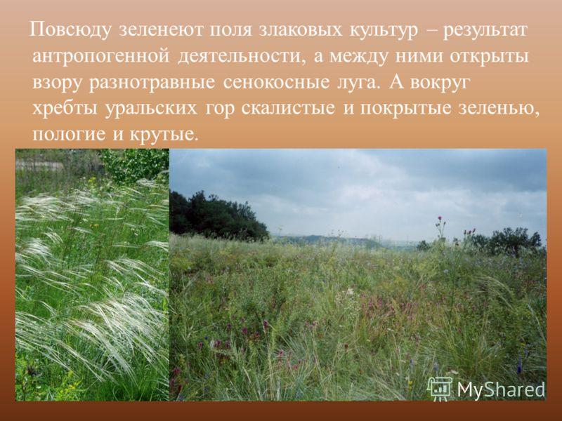Повсюду зеленеют поля злаковых культур – результат антропогенной деятельности, а между ними открыты взору разнотравные сенокосные луга. А вокруг хребты уральских гор скалистые и покрытые зеленью, пологие и крутые.