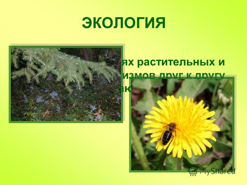ЭКОЛОГИЯ Наука об отношениях растительных и животных организмов друг к другу и к окружающей среде
