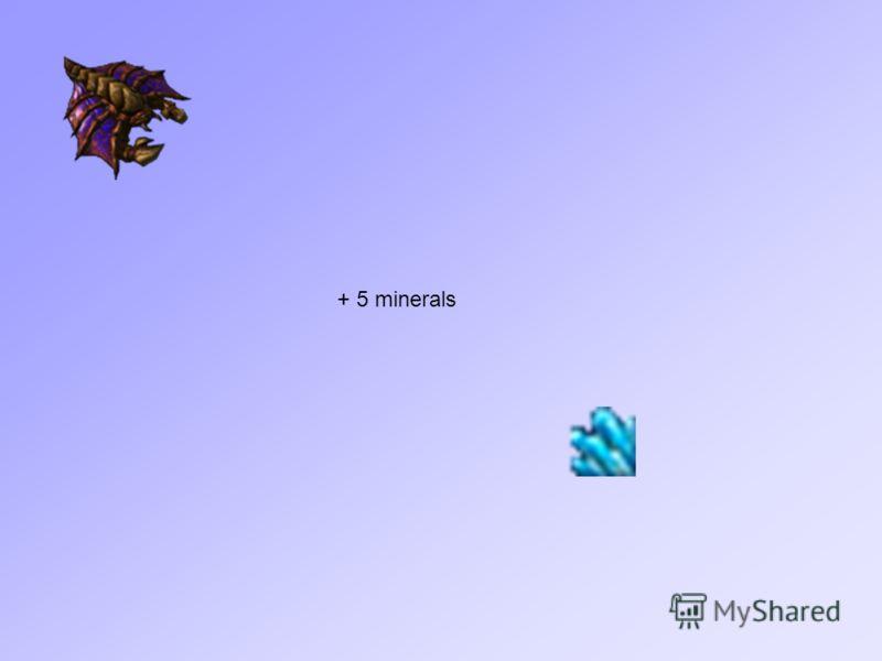 + 5 minerals