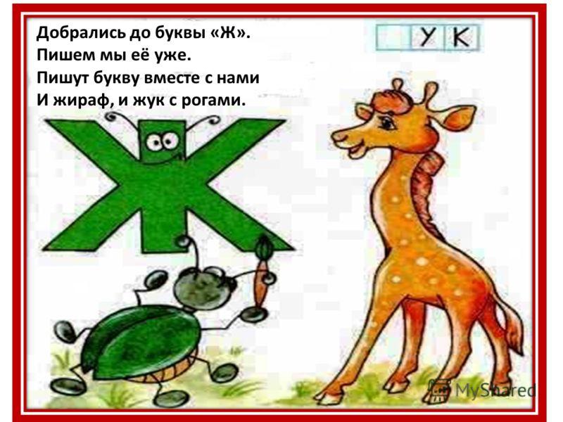 Добрались до буквы «Ж». Пишем мы её уже. Пишут букву вместе с нами И жираф, и жук с рогами.