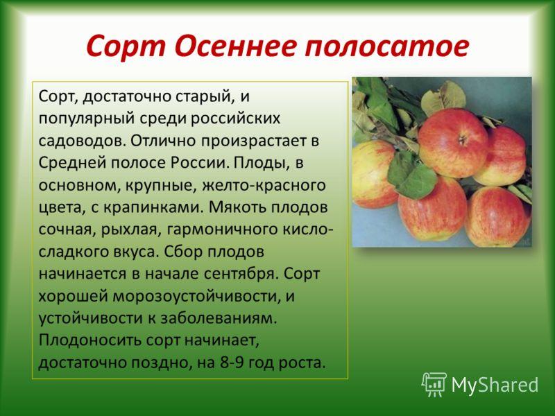 Сорт Осеннее полосатое Сорт, достаточно старый, и популярный среди российских садоводов. Отлично произрастает в Средней полосе России. Плоды, в основном, крупные, желто-красного цвета, с крапинками. Мякоть плодов сочная, рыхлая, гармоничного кисло- с