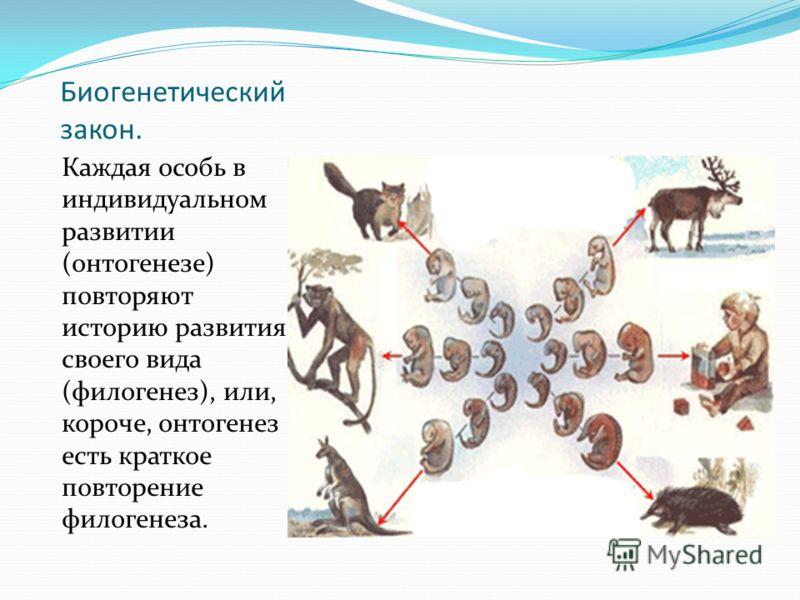 Биогенетический закон. Каждая особь в индивидуальном развитии (онтогенезе) повторяют историю развития своего вида (филогенез), или, короче, онтогенез есть краткое повторение филогенеза.