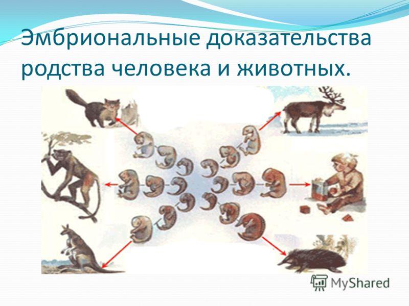 Эмбриональные доказательства родства человека и животных.