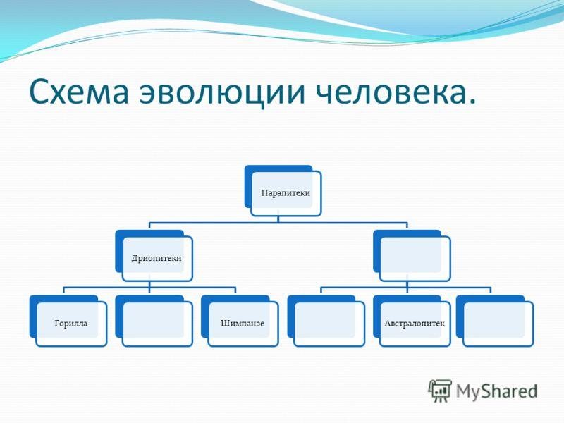 Схема эволюции человека.