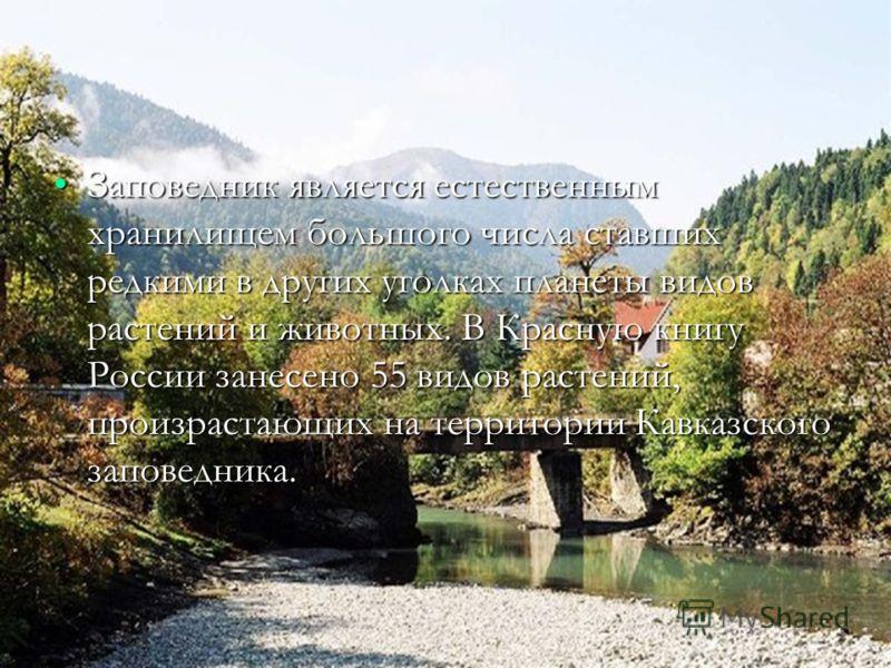 Заповедник является естественным хранилищем большого числа ставших редкими в других уголках планеты видов растений и животных. В Красную книгу России занесено 55 видов растений, произрастающих на территории Кавказского заповедника.Заповедник является