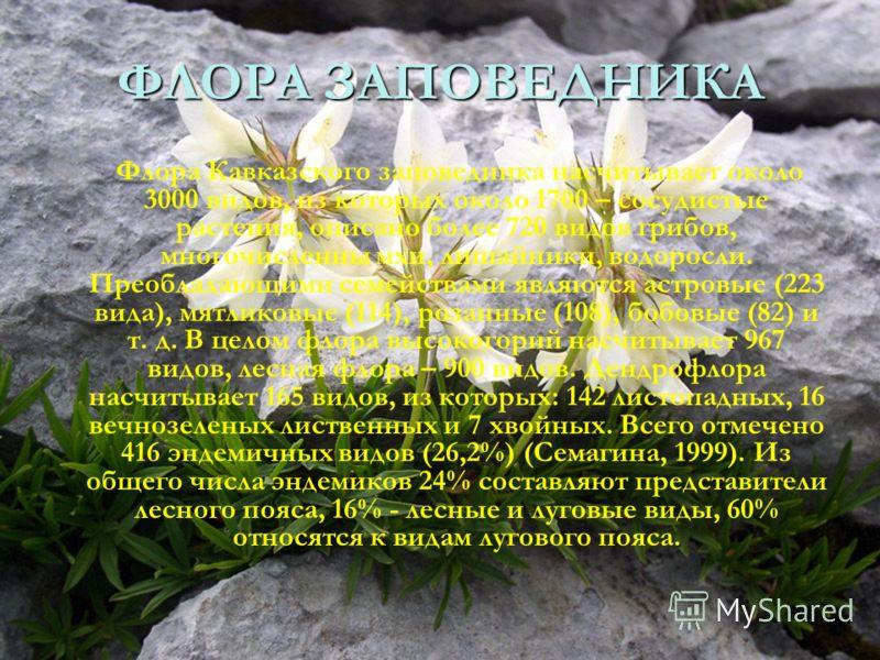 ФЛОРА ЗАПОВЕДНИКА. Флора Кавказского заповедника насчитывает около 3000 видов, из которых около 1700 – сосудистые растения, описано более 720 видов грибов, многочисленны мхи, лишайники, водоросли. Преобладающими семействами являются астровые (223 вид