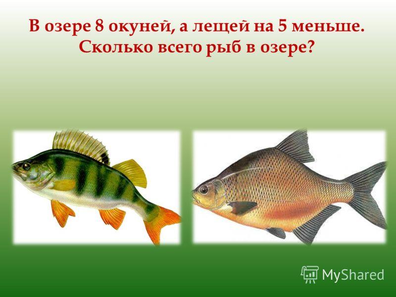 В озере 8 окуней, а лещей на 5 меньше. Сколько всего рыб в озере?