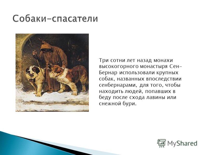 Три сотни лет назад монахи высокогорного монастыря Сен- Бернар использовали крупных собак, названных впоследствии сенбернарами, для того, чтобы находить людей, попавших в беду после схода лавины или снежной бури.