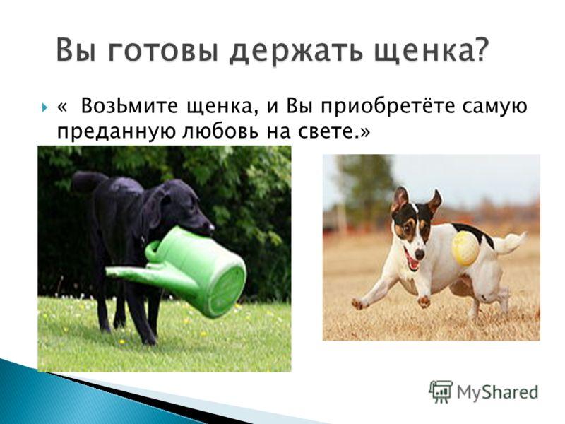 « ВозЬмите щенка, и Вы приобретёте самую преданную любовь на свете.»