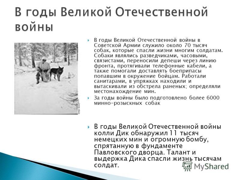 В годы Великой Отечественной войны в Советской Армии служило около 70 тысяч собак, которые спасли жизни многим солдатам. Собаки являлись разведчиками, часовыми, связистами, переносили депеши через линию фронта, протягивали телефонные кабели, а также